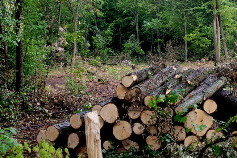 Військова прокуратура на Хмельниччині займається незаконною вирубкою лісу - фото 2