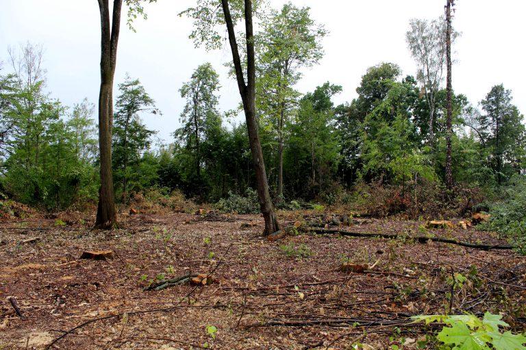 Військова прокуратура на Хмельниччині займається незаконною вирубкою лісу - фото 3